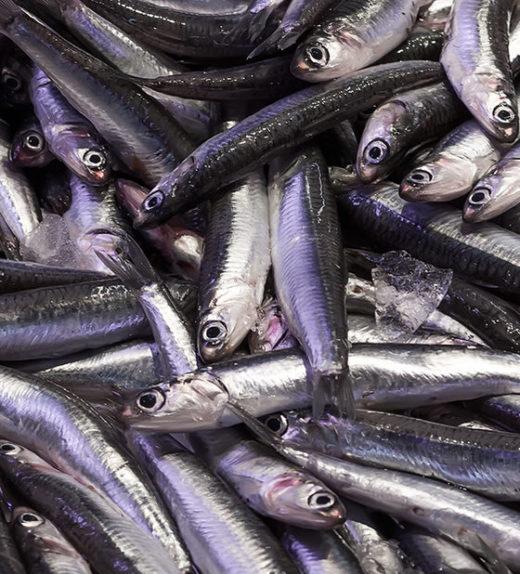 Fresh raw anchovies at fish market