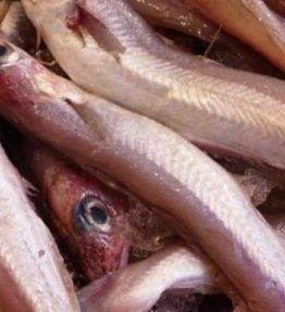 maira pescado