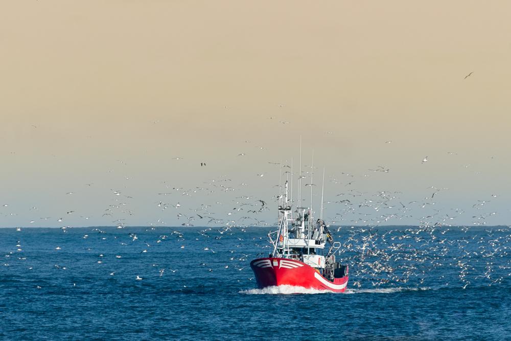 Pesca sostenible: Un modelo para el futuro